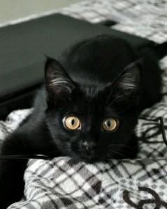 Queca, una gata muy especial...